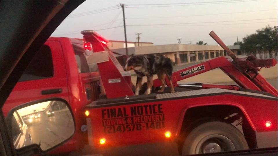 Woman outraged after seeing dog on back of tow truck on busy highway