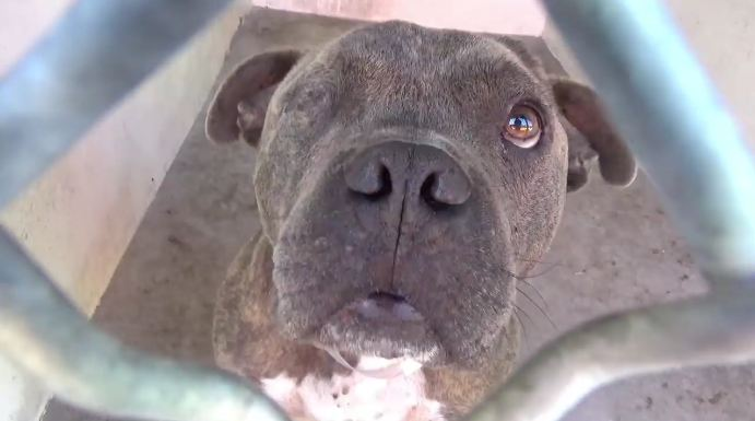 One-eyed dog at animal shelter in danger
