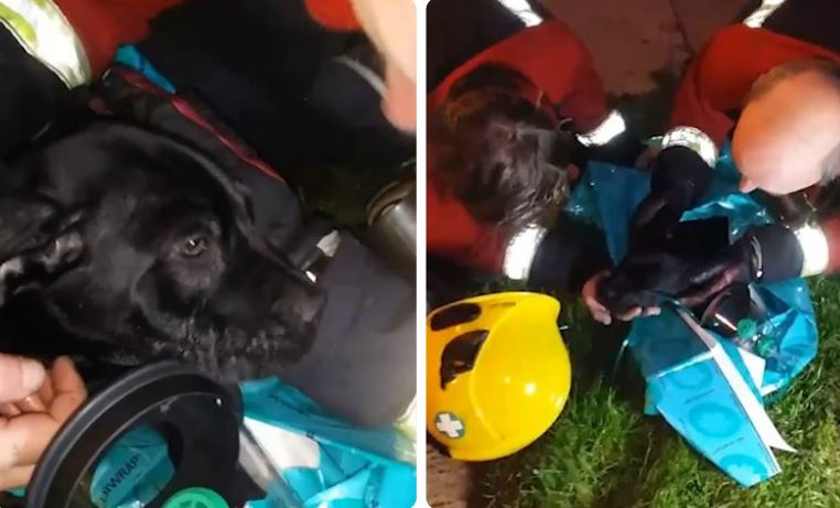 Unconscious Dog Pulled From Smoky Building Is Saved Thanks To New Firefighter Procedure