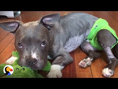 Pit Bull Tied To A Pole Finds Loving Home And Now Has His Own Patio