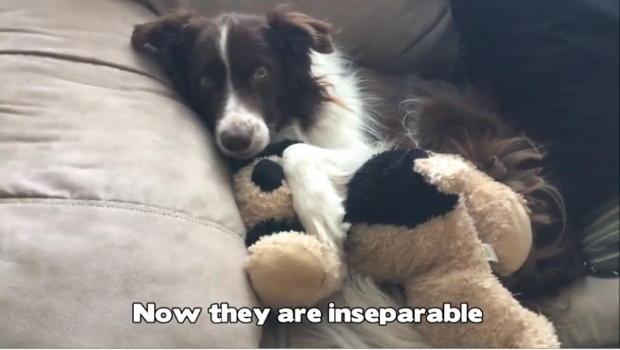 Dog looses best friend to cancer, finds comfort in stuffed animal