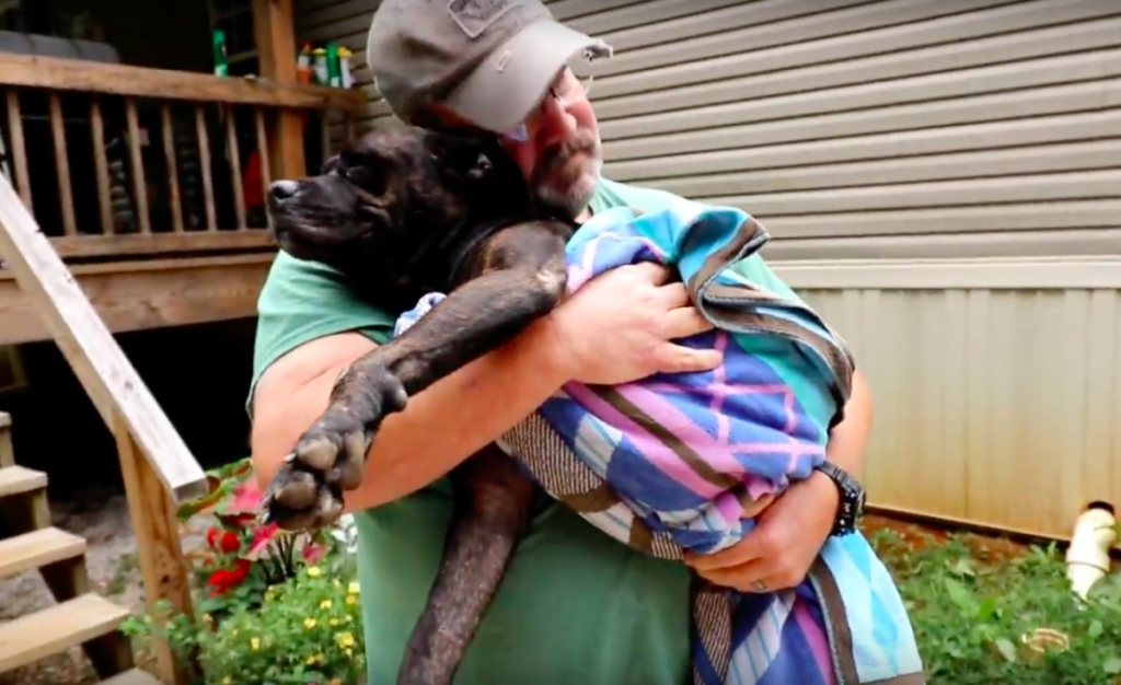 Injured Stray Dog Walked Onto A Man's Porch, But Had No Idea She Was About To Meet Her New Family