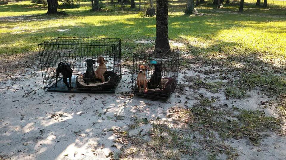 Heartless owners abandoned caged dogs as monster storm approaches