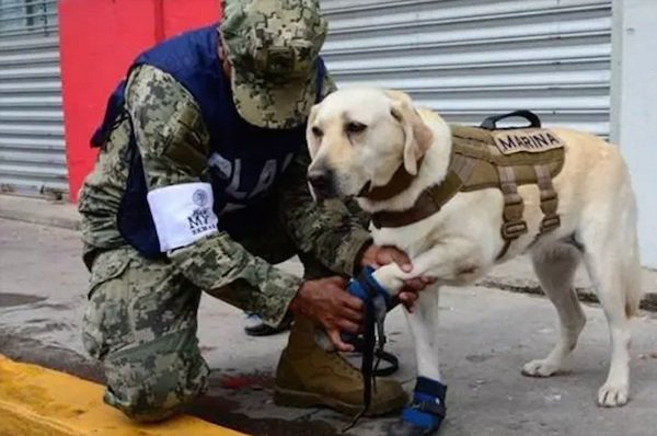 Frida the Mexican Rescue Dog Is Saving Lives … And Winning Over The Internet!