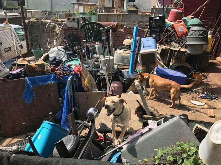 Baltimore junkyard mama leads rescuers to her newborn puppies