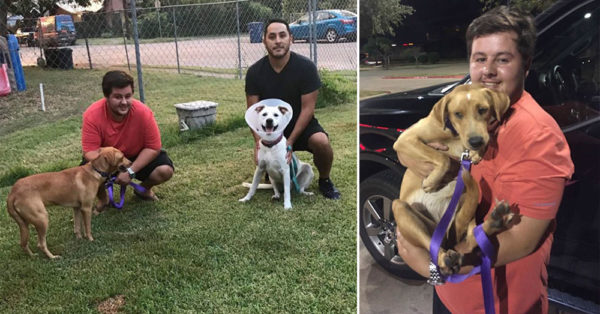 This Young Man Drove 4 Hours Into A Raging Hurricane To Save A Pair Of Dogs He'd Never Met