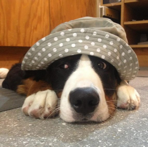 12 Dogs Who Aren't Impressed With The Silly Hats Their Humans Picked Out