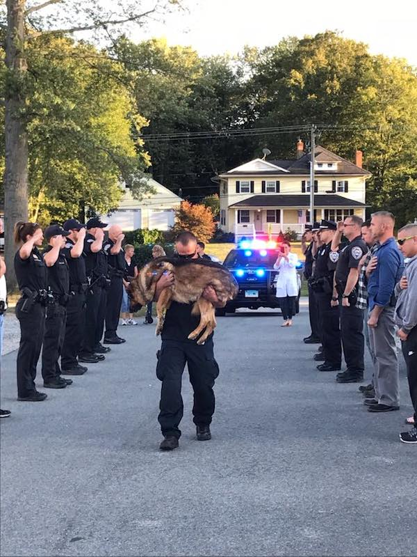 Beloved Police Dog Saluted For His 10 Years Of Dedicated Service Before Saying Goodbye