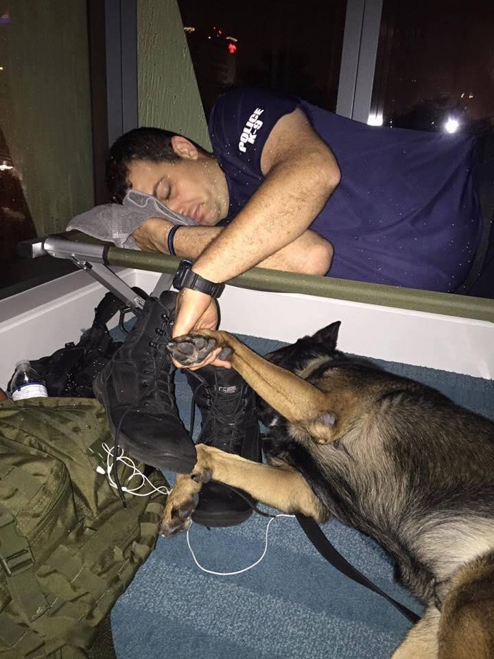 Fort Lauderdale Police Tweet touching photo of K9