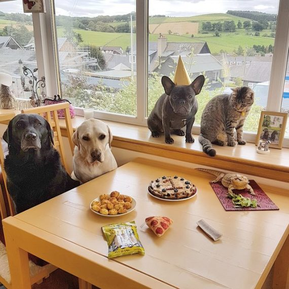 To Celebrate A Special Birthday, Dog Has A Party With All Of Her Friends