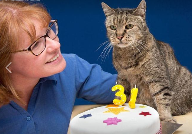 World's oldest cat has died
