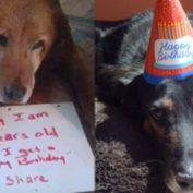12 Sweet Senior Dogs Celebrating Their Birthdays