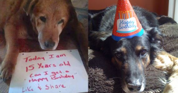 12 Sweet Senior Dogs Celebrating Their Birthdays