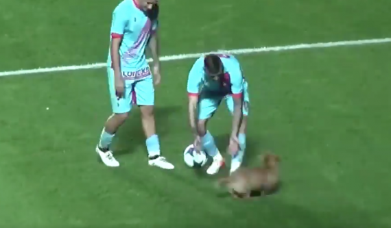 Soccer Match Brought To A Halt When Stray Dog Decides To Play Fetch