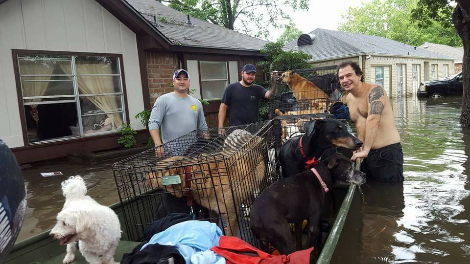 Woman caring for 21 dogs refused to leave – rescuers helped them all