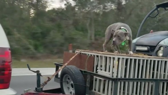Facebook User Captures Shocking Video of Dog Chained to Open Trailer on Highway