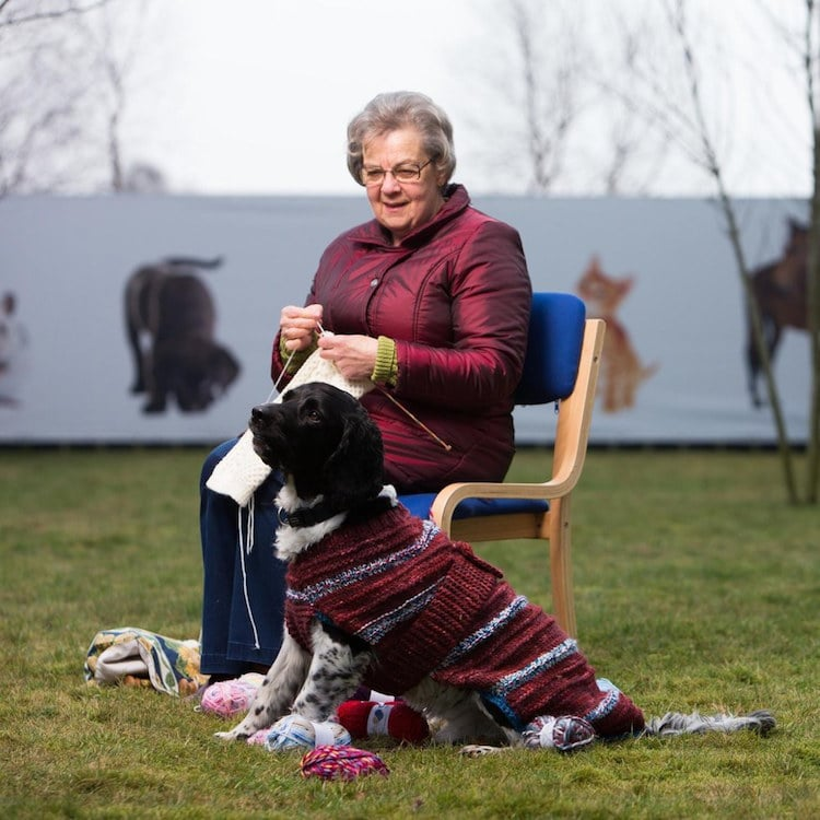 """Unadoptable"" Dark Dogs are Given Bright Sweaters to Help Them Find Forever Homes"