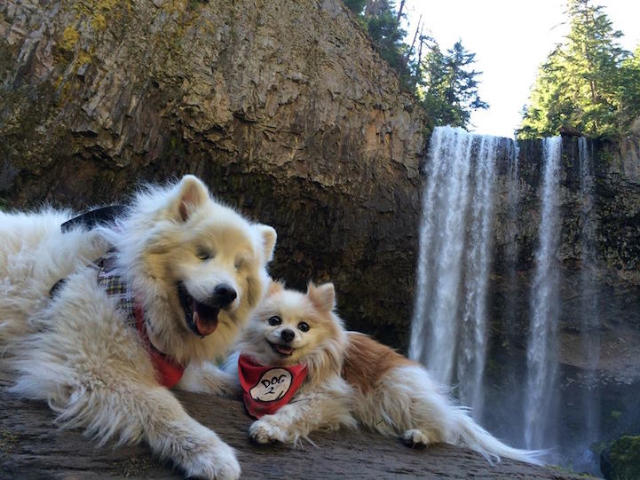Tiny Rescued Pomeranian Serves as Seeing Eye Dog for His Blind Best Friend