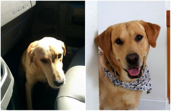 Pics Of Pets Before And After Adoption That Speak Louder Than Words
