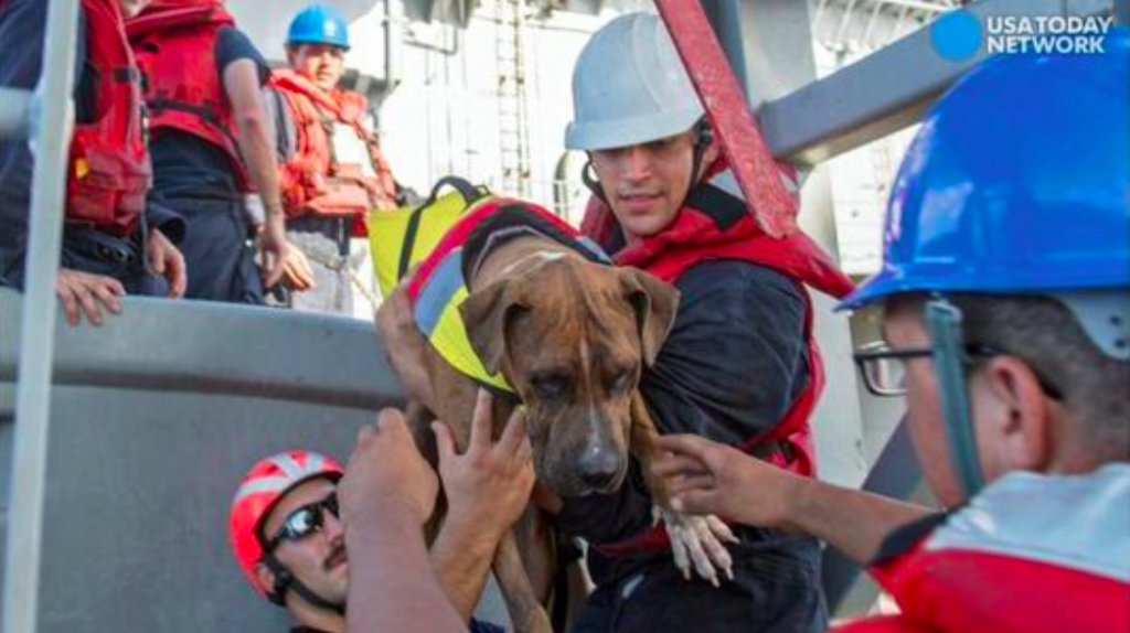Navy Rescues Two Women And Their Dogs Who Were Lost At Sea For Five Months