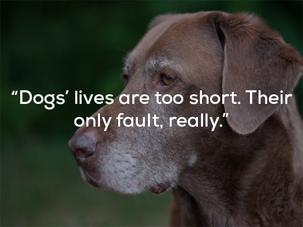 Quotes To Remind You That Dogs Are The Greatest
