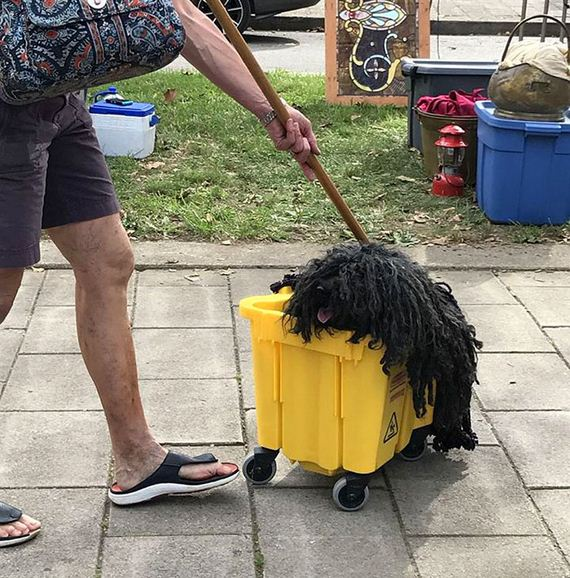 Woman Dresses Her Dog As A Mop, And It's Probably The Best Pet Costume We've Ever Seen