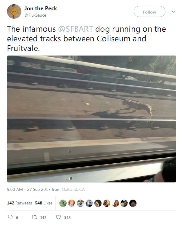 Runaway Dog Stops Train In Its Tracks Until He's Brought To Safety