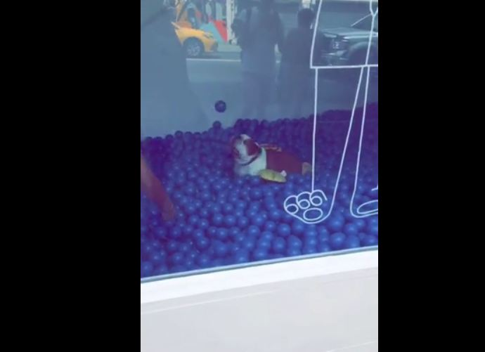 A dog's ultimate dream – playing in a ball pit!