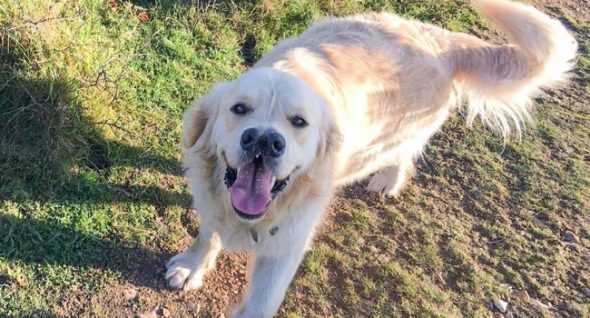 Wallis Has Two Noses … And One, Big Golden Heart!