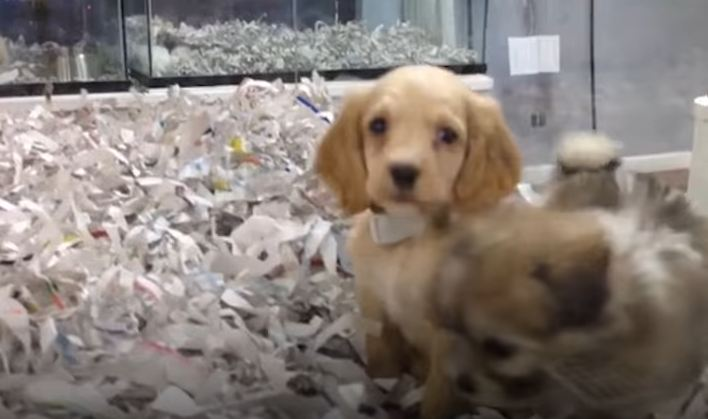 Pet Store Employees Caught Lying About Their Puppy Mill Dogs