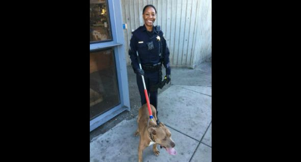 Dog Who Caused Major Train Delays in San Francisco Now Up For Adoption!