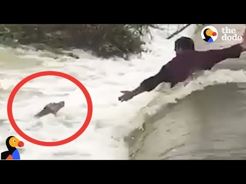Men Risk It All To Attempt The Rescue Of A Drowning Dog