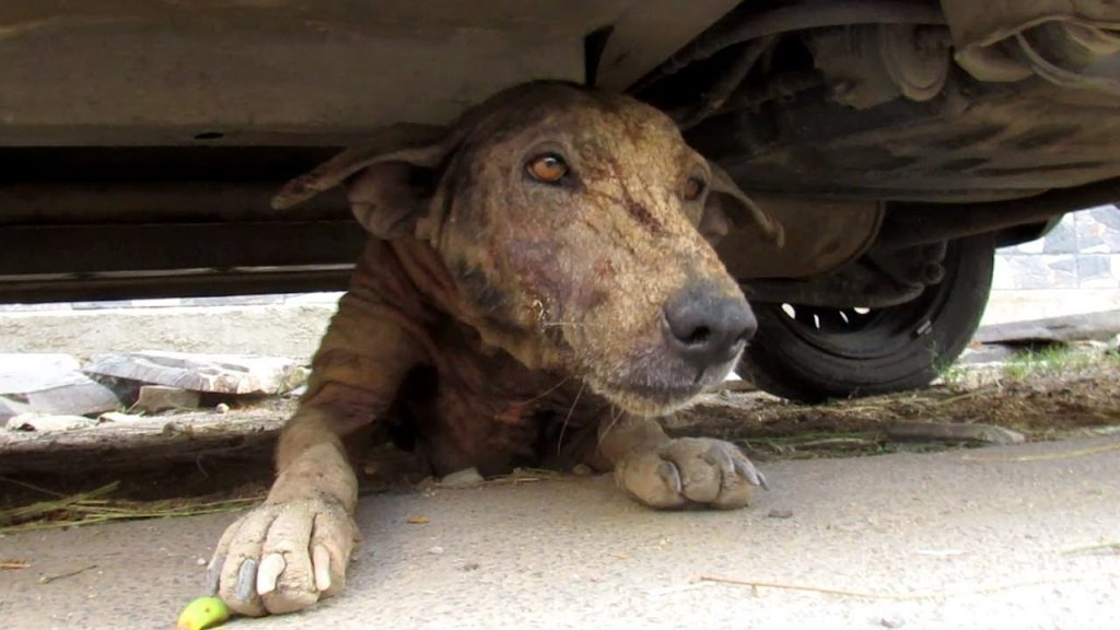Street Dog Lured Out From Under Car Is So Friendly Despite Her Condition