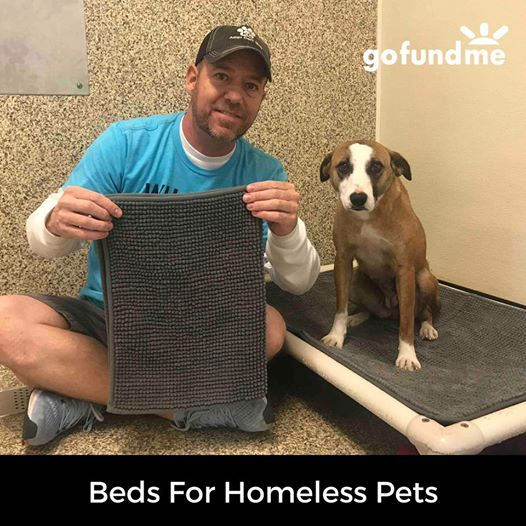 Volunteer Thinks Up Genius Plan To Ensure Every Shelter Pet Has A Bed