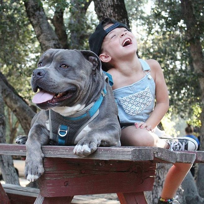 Little Girl Sings To Her Pit Bull In A Precious Display Of Affection