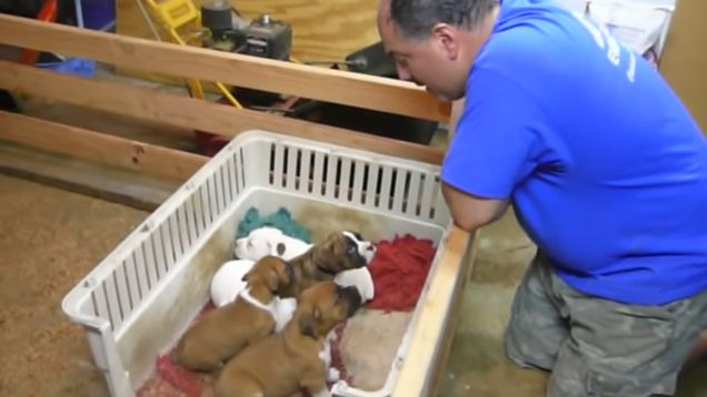 Aww! Man Sweetly Sings Puppies to Sleep