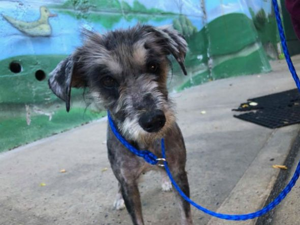 Gigi Was Abandoned, Alone & in Grave Condition … But Get A Load of Her Now!