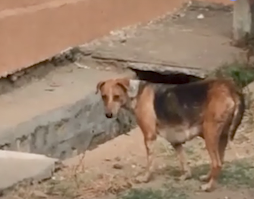 Mama Couldn't Find Her Puppies, But Rescuers Showed Up And Heard Their Cries