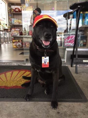 Abandoned Dog Wanders Up To A Gas Station — And They Give Him A Job