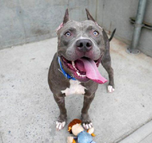 Dog Abandoned Because Family Had 'Too Many Pets' Won't Let Go Of Her Toy