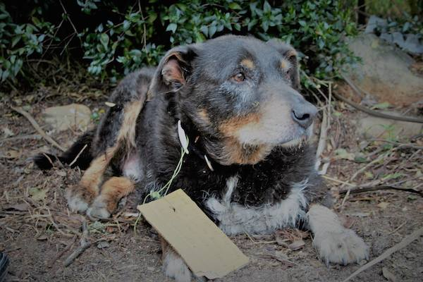 Family Had No Idea Their Old Dog Was A Hero – Until They Read The Note On His Collar