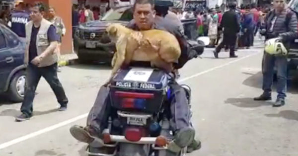 Police Find Terrified Puppy In The Middle Of A Mexico City Street After Earthquake