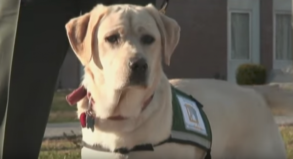 Veteran Takes His Service Dog To Prison, And It Takes Off Running Toward An Inmate