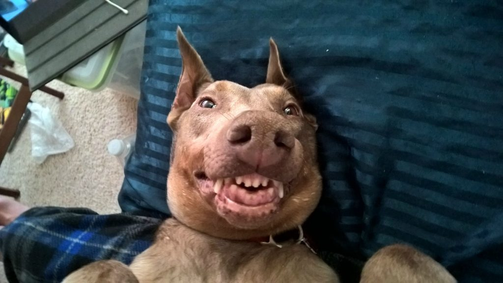 Derpy Dogs Trying To Flash Their Pearly Whites For The Camera