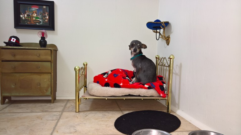 Lucky Dog Gets His Very Own Bedroom In The Tiny Space Under The Stairs