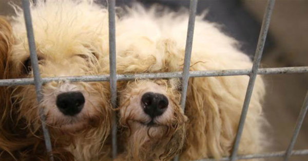 What Rescuers Saw When They Set Foot Inside This Texas Puppy Mill Made Them Sick