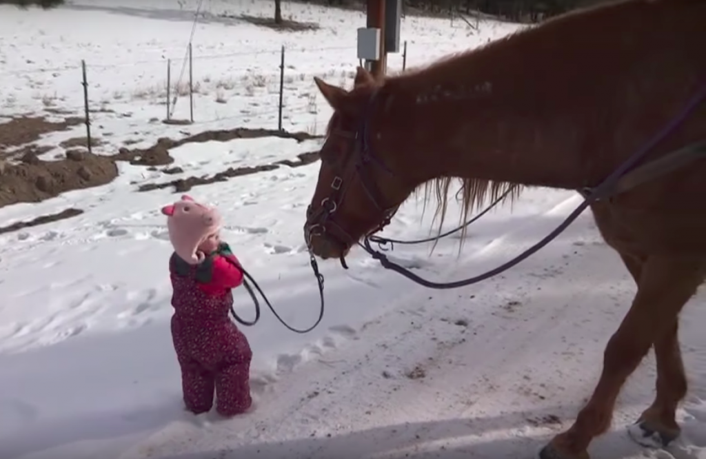 Little Girl Gets Stuck While Walking Horse In The Snow – Horse Knows Just What To Do