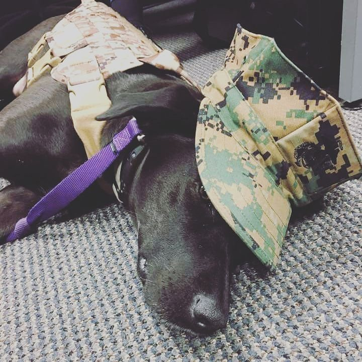 Service Dogs Are Being Trained For The Most Amazing Reason