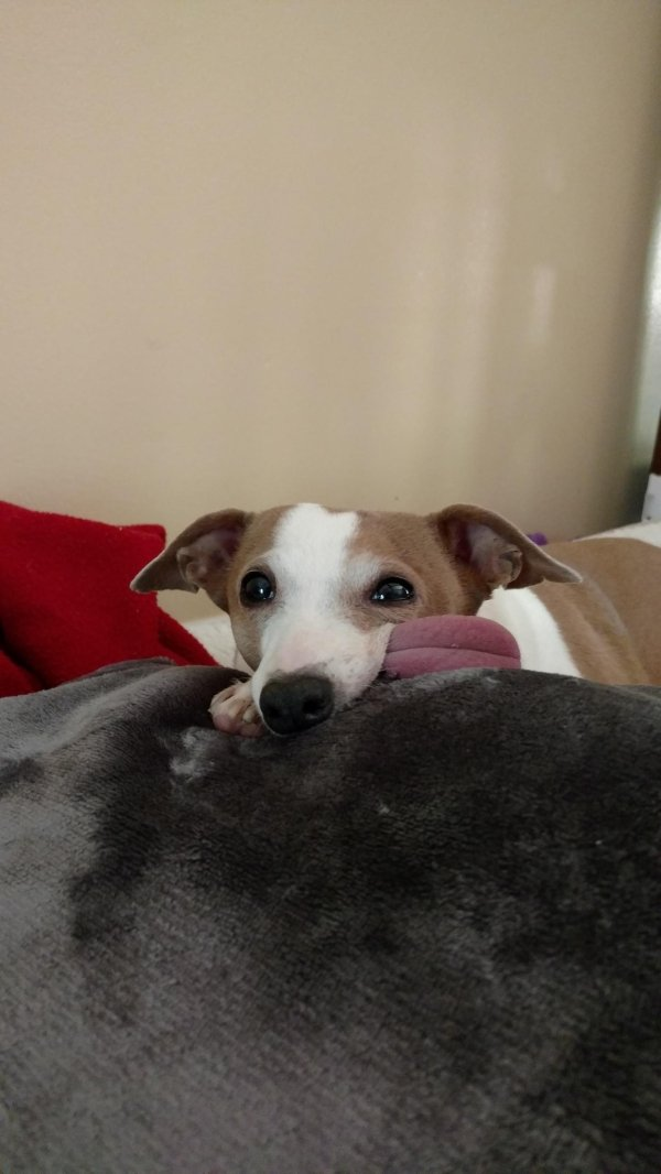 Save Me Dog Rescue Emily