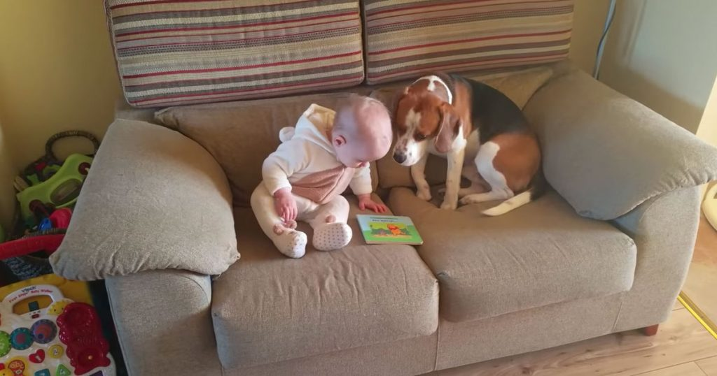 Charlie The Beagle Waited Months For Baby Sister – His Reaction When They Meet Is Going Viral